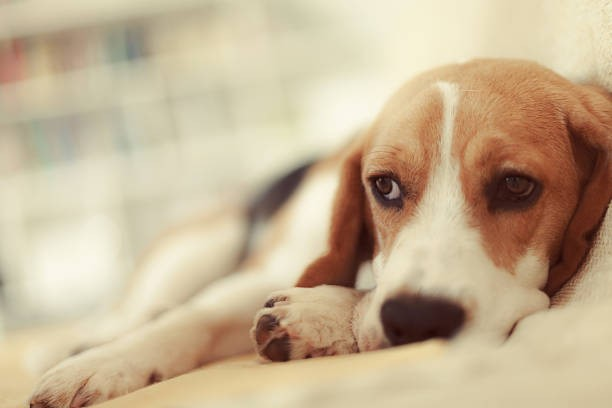 How Long Does A Dog Remember A Person? - supervices